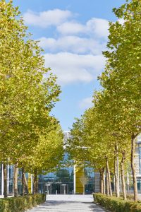 tree lined avenue with modern offices by Airey Spaces