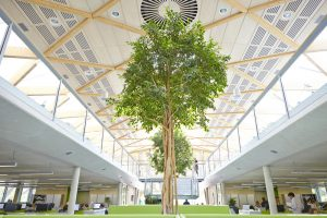 trees in living planet centre office space in WWF building by Airey Spaces